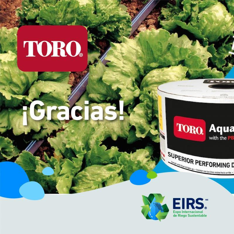 (Español) Toro_A